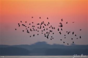 Flock Motion