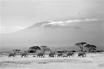 Elephants and Mt. Kilimanjaro