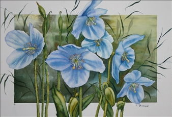Beautiful Blue Poppies