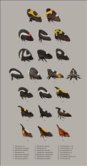 Treehoppers III