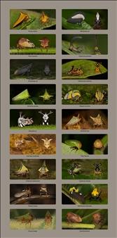 Treehoppers II