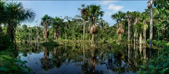Blackwater Swamp