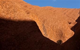 Lone Tree At Uluru
