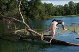 Tree Jumper, Mauston, Wisconsin