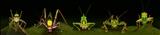 Katydid Lineup I