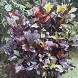 Crotons III Victoria's Garden Rarotonga