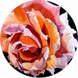 Blushing Peach Rose