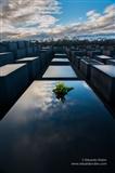 Holocaust Tribute