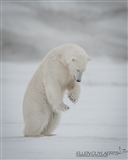 Tai Chi Bear
