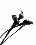 Elegance Calla Lys Noir 2