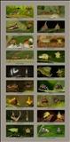 Treehoppers I