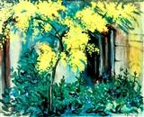 Arbust de Mimosa