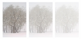 North Shore Flurry | Triptych