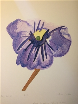 Viola