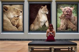 "Images of Mom Digital Assemblage on Fine Art Paper 14"" x 20"""