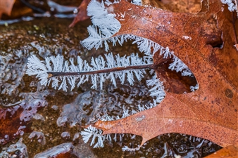 """Frost Leaf Metal Sublimated Print 16"""" x 24"""""""