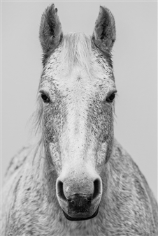 Horse Avedon