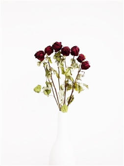 Withered Roses In a White Vase IV