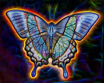 Butterfly 10x8