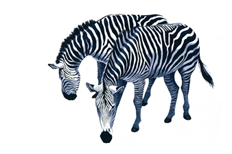 Zebras