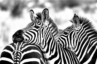 "Best friends, Tanzania - Yair Tzur - Israel Photograph 0"" x 0"""
