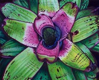 """Fairchild Bromeliad Oil on Canvas 24"""" x 30"""""""