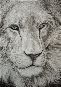 """Lion Chalk and Graphite on Paper 27"""" x 19.5"""""""