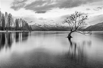 """The Wanaka Tree - Jacob Marsh - Canada Photograph 0"""" x 0"""""""