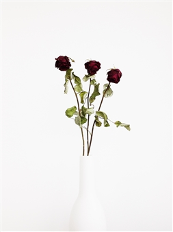 Withered Roses In a White Vase II