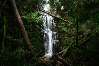 "Movement in Nature - Jordan M. Lomibao - United States Photograph 0"" x 0"""