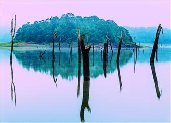 """Forgotten Forest Digital Photograph on Fine Art Paper 17"""" x 23.5"""""""