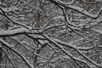 "Snow Path Photograph on Fine Art Paper 24"" x 30"""