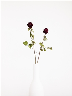 Withered Roses In a White Vase I