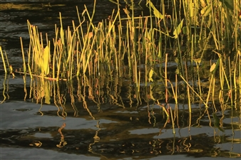 """High Tide in Chartreuse Photograph on Fine Art Paper 16"""" x 24"""""""