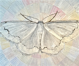 """Lace Moth Oil on Canvas 48"""" x 60"""""""