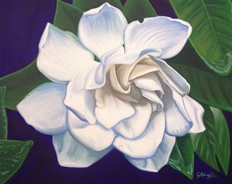 Gloucester Gardenia