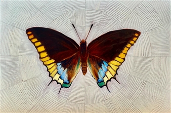 """Charaxes Array Oil on Copper Panel 6"""" x 9"""" <span style='color:red;'>Sold</span>"""