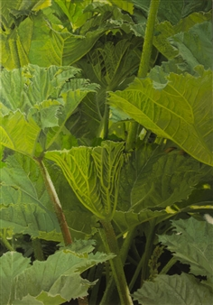 "Gunnera I Oil on Canvas 39.5"" x 28"""