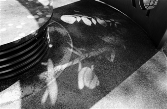 "Shadow Art Archival Pigment Print 13.5"" x 20.5"""