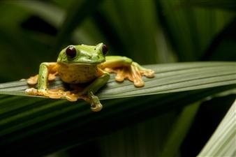 "The Frog Prince - Igor Porciuncula - United states Photograph 0"" x 0"""