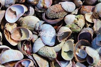 "Shells Archival Pigment Print 16"" x 20"""