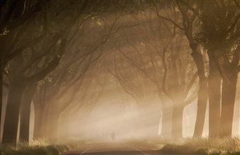 "The Fog Photographic Print on Aluminium Dibond 16"" x 24"""