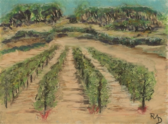 Sonoma 1