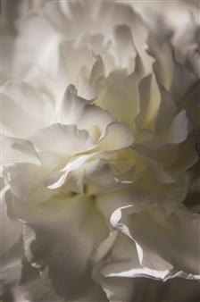 "Enlightened Photograph on Aluminum 24"" x 16"""