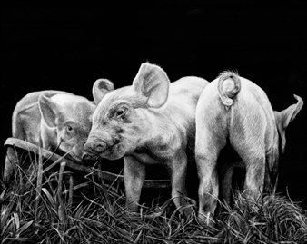 """Three Little Pigs Ink & Clay on Scratchboard 8"""" x 10"""""""