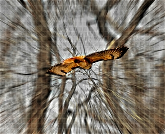 Hawk Eye
