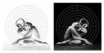 "Bilateral Coch Head Digital Black & White Photography 19"" x 40"""