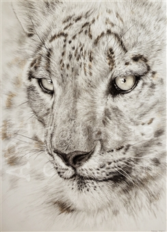 """Snow Leopard Chalk and Graphite on Paper 27.5"""" x 19.5"""""""