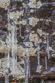 """Lichen Dribble Brown Green Metal Sublimated Print 18"""" x 12"""""""