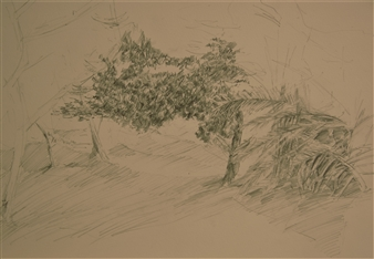 """Sketch in the Garden Pencil on Paper 12"""" x 18"""""""